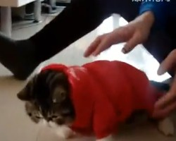 Cat in China Becomes Temporarily Paralyzed After Getting Dressed Up