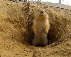 Curious gopher lives under rocket launchpad