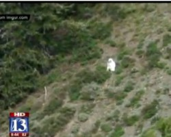 Goat Man Spotted In Mountains Of Northern Utah