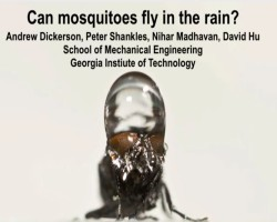 Mosquitoes also can fly in the rain