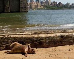 Dead East River monster confounds New Yorkers animal experts