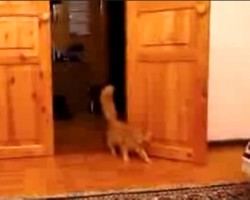 Cat Scared of Mario's Jumps