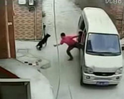 Dog snatcher in China makes off with pet in three seconds flat