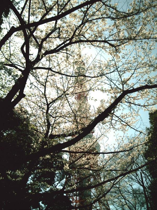 s-PICT0505b.jpg