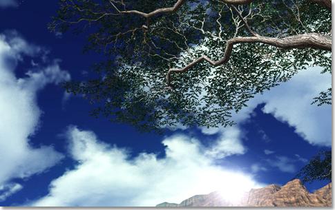 見上げると空が綺麗