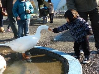 ブログ2 0114動物園 (1)