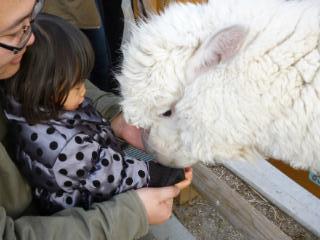 ブログ2 0114動物園 (6)
