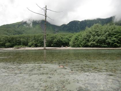 azusagawa2012-8.jpg