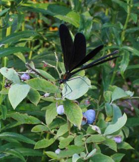 hagurotonnbo2012-8.jpg