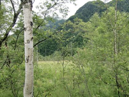 kamikouti-2012-8tasiromae.jpg