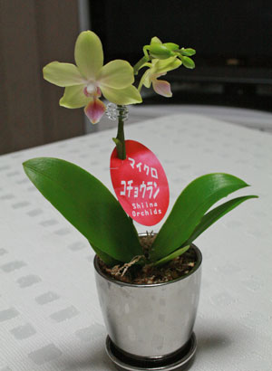 kotyouran2012-5.jpg