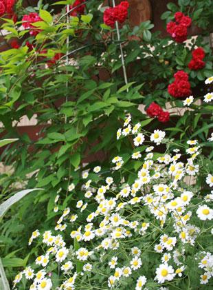 tanaseumu-kingu2012-6.jpg