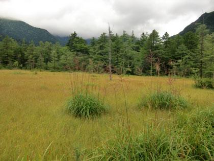 tasirositugen2012-8.jpg
