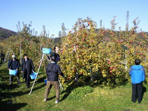 リンゴ狩り(26.11.28)