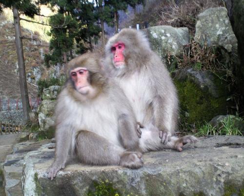 お猿二匹(26.11.27)