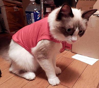 赤い服だん1