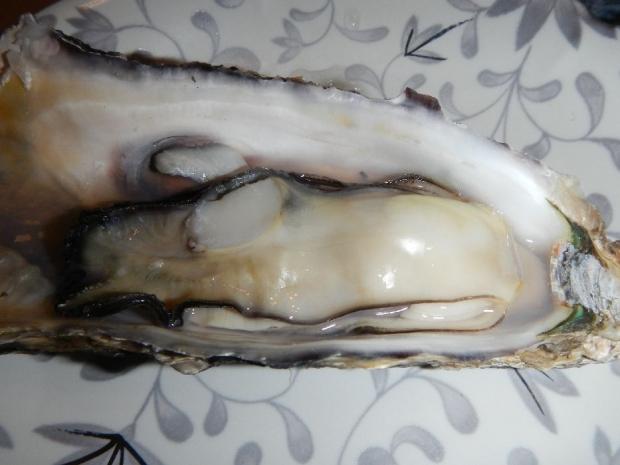 芭露牡蠣 (8)
