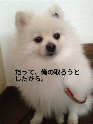 fc2blog_20131211203155243.jpg