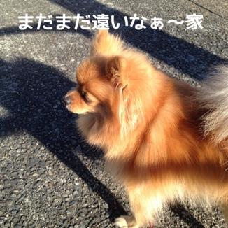 fc2blog_20131215175532bcb.jpg
