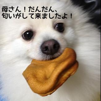 fc2blog_20131216194616ef1.jpg