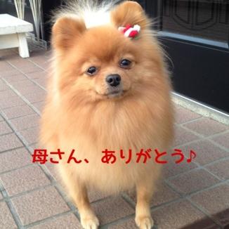 fc2blog_20131225223249509.jpg