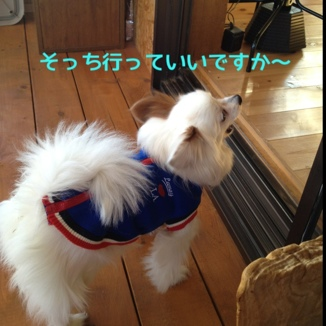 fc2blog_20131228183258b5d.jpg