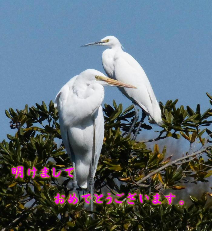20140101 daisagi-kosagi-20130305-P1010020
