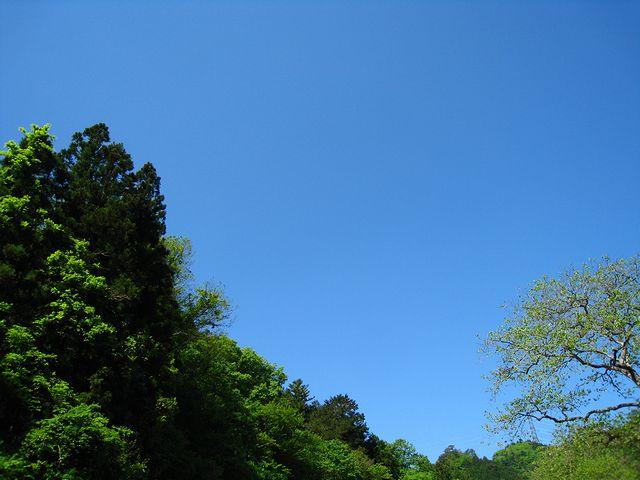 2012.5.19下仁田釣行 (23)