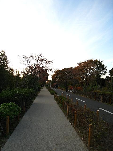 2012.11.3吉祥寺1 (29)