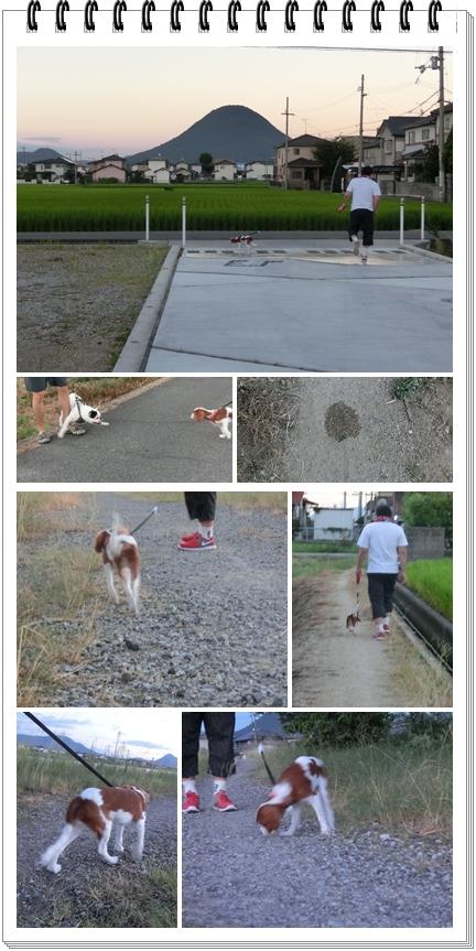 6か月pocoお散歩blog1