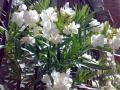 002_02_ミラノの花