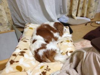 fc2blog_20121108183028342.jpg