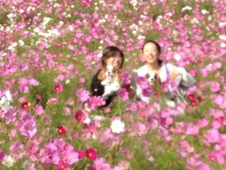 fc2blog_20121123164855e66.jpg