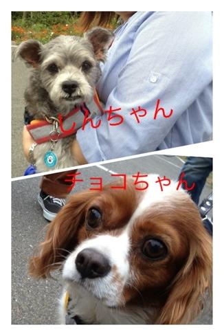fc2blog_20121123165424b8d.jpg