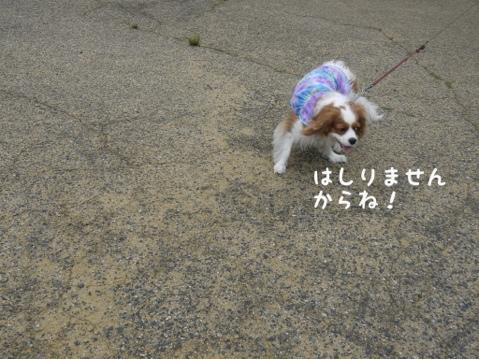 fc2blog_201305131849298d9.jpg