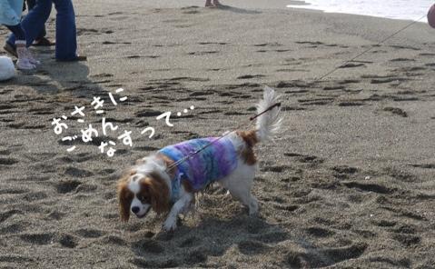 fc2blog_20130515171805e5e.jpg