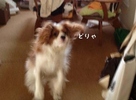 fc2blog_20130529222822ae5.jpg