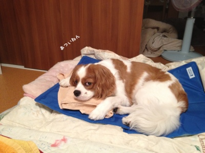 fc2blog_20130710133627e10.jpg