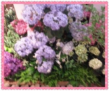 PhotoGrid_1338623936463.jpg