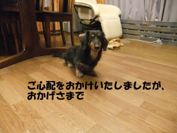 写真629(№203用)1