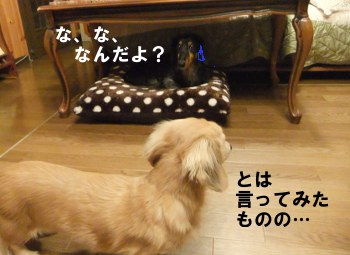 写真634(№204用)1