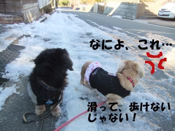 写真642(№206用)1
