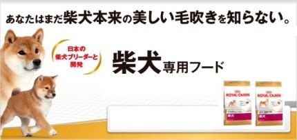 RC柴犬専用フード