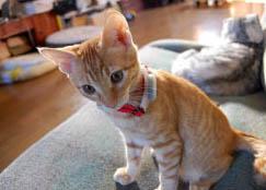 lo8tor-cat.jpg