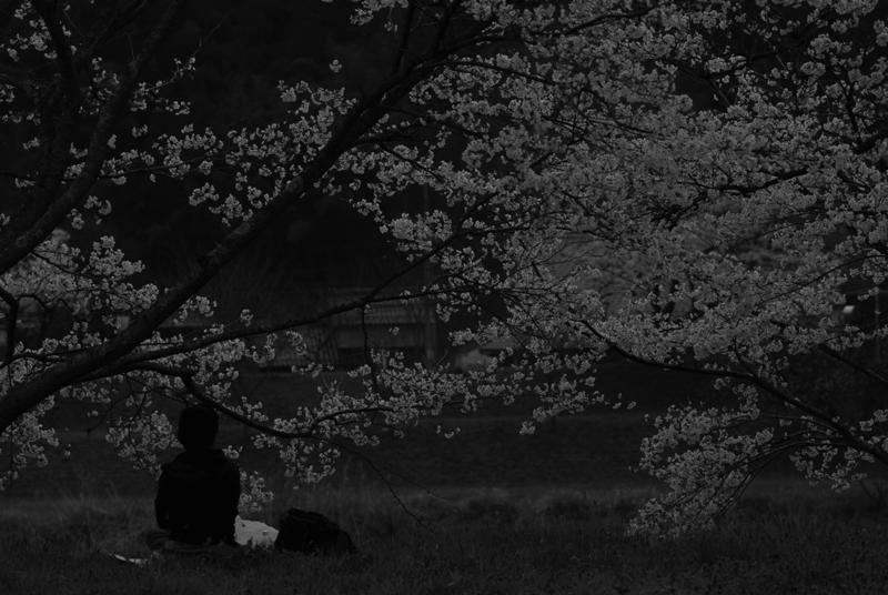 三刀屋お花見 007
