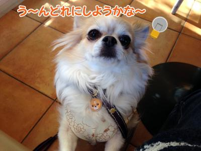 6_convert_20140130113846.jpg