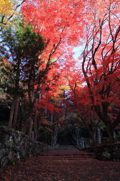 2012-11-25_0162.jpg