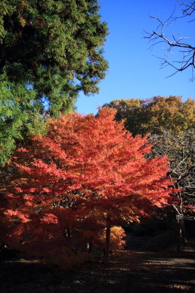 2012-11-25_0324.jpg