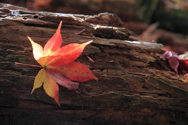 2012-11-25_0659.jpg