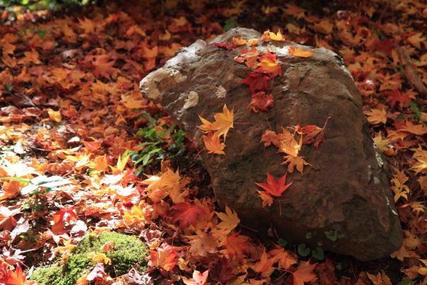 2012-11-25_0781.jpg
